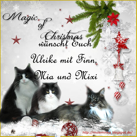 An den Beitrag angehängtes Bild: http://www.waldkatzenwelt.de/gb_bilder/waka_weihnacht